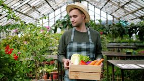 Slow motion of handsome man in apron walking in hothouse with organic food. Slow motion of handsome man in apron walking in hothouse with box of organic food stock footage