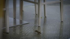 Slow motion the house mouse running around furniture of kitchen inside house stock video