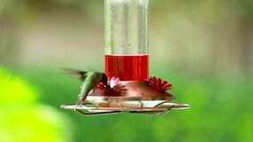 Slow motion of a hummingbird