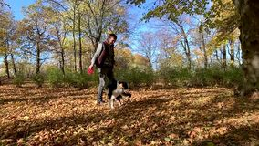 Man with dog in park. Slow motion - Man training a happy dog in the autumn park. Beautiful Australian shepherd puppy 10 months old - jumping, enjoy playing in a stock footage
