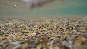 Slow motion movement of small shells under the water stock video footage