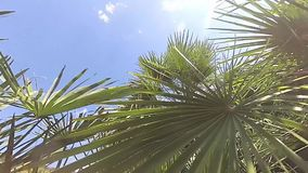 Slow motion of moving between palm leaves. On a sunny day stock video