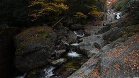 Slow Motion Pan down Sams Branch Creek. Along the Blue Ridge parkway stock video