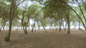 Slow motion pan up shot under trees canopy. Slow motion pan up shot under green trees canopy stock video footage