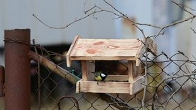 Slow motion, a great tit in the feed house. A slow-motion picture of a small great tit in a feeder during the cold season stock footage