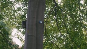 Slow Motion The plate with the number on the tree. The concept of creating a registry and passport ID of plants and. Trees. Savings, conservation of nature, the stock footage