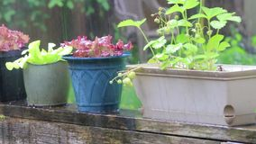 Slow motion potted plants in the rain. Potted plants out in heavy rain and hail stock video footage
