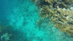 Slow motion. The seabed near the reef stock video