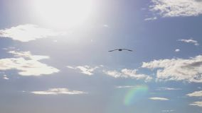 Seagull flying in the sea. Beautiful sun over the sea, sun flare. Slow motion. 1920x1080 stock video footage