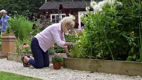 Slow motion shot of mature couple at work watering and planting flowers in garden at home