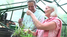 Slow Motion Shot Of Middle Aged Couple Working In Greenhouse stock video
