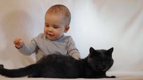 Slow motion shot of portrait of a little boy and a cat sitting on the couch. The friendship of the child and the cat. stock video footage