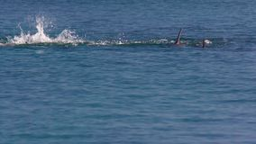 Two dolphins swimming majestically. A slow motion shot of two dolphins swimming majestically stock video