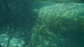 Establishing the rocks and magroves underwater. A slow motion shot underwater. Mangroves and rocks are captured on the shot stock footage