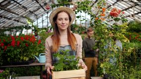 Slow motion of smiling florist woman carrying box of flowers in greenhouse. And looking around at blooming plants. People, agriculture and floristry concept stock footage