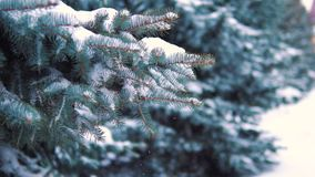 Slow motion, snow falling slowly from a tree in a winter park.  stock footage
