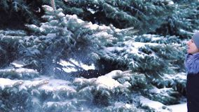 Slow motion, snow falls from trees in a snow-covered winter park.  stock video