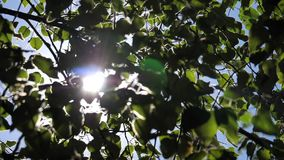 Slow motion of sun shining through leaves. During summer daylight stock footage