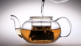 Slow motion. Tea is brewed in a glass teapot. Studio. Tea is brewed in a glass transparent teapot, after the pouring water cookware close lid, studio with white stock video