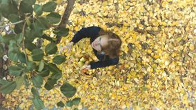 Apple harvesting among the yellow leafs. Slow motion. Top view. A girl with baskets of apples comes to a tree and tears off apples stock video