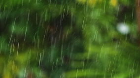 Slow motion tropical rain stock video footage