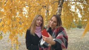 Two girls in an autumn park. Slow motion. Two young cheerful girls are photographed among the yellow birches stock footage