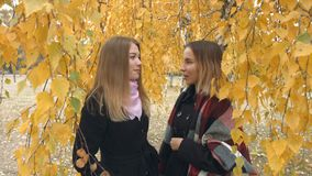 Two girls in an autumn park. Slow motion. Two young cheerful girls are talking among the yellow birches stock footage
