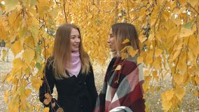 Two girls in an autumn park. Slow motion. Two young cheerful girls are talking among the yellow birches stock video