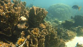 A shot beside and near coral reef. A slow motion underwater shot of small fish and corals in an Australian sea stock footage
