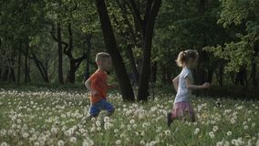 Slow motion video: Two child are running around in the field of dandelions at sunset. Happy childhood, good time. stock video footage