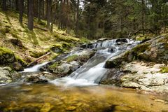 Slow motion waterfall in a beautiful pine trees forest in Mojonavalle, Canencia, Madrid. royalty free stock photo