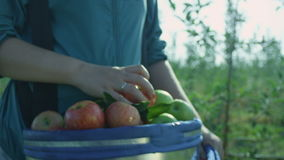 Slow Motion Woman Carries Big Bucket with Fresh Juicy Apples. Slow motion woman carries big blue bucket full of fresh juicy red and green apples and puts one stock video