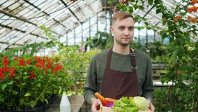 Slow motion of young farmer carrying box of fresh vegetables in greenhouse. Slow motion of young farmer in apron carrying box of fresh vegetables in greenhouse stock footage