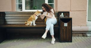 Slow motion of woman feeding shiba inu dog and playing with pet outside in cafe. Slow motion of young woman feeding shiba inu dog and playing with pet outside in stock footage