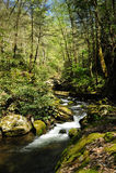Slow Moving Creek Royalty Free Stock Image