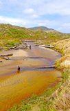 Slow Moving Creek amongst the Sand Dunes. Duck Creek on the Western Coast of Stewart Island Royalty Free Stock Photography