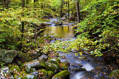 Slow Moving Creek and Fall Leaves Royalty Free Stock Photos