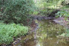 Lazy stream in the forest. A slow moving creek in the forest with fallen leaves floating on the water surface and bank lined with forest greenery royalty free stock photo
