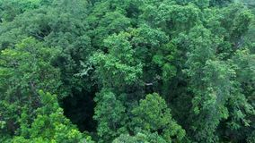 Slow moving drone above tree tops. An aerial shot of tree tops. The drone approaches the tree tops in slow motion stock video