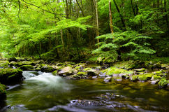 Slow moving stream in Smoky Mountain National Park. A slow moving stream in Smoky Mountain National Park in Summer Stock Image