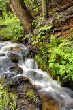 Slow moving waterfall. Tadpole Creek in Nova Scotia, shows a frothy flowing stream of water stock photos