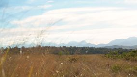Slow pan over grassy African field with mountains in the distance stock footage