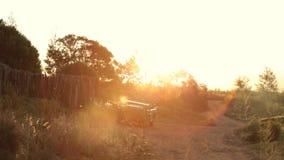 Slow pan over safari camp at sunset stock video footage