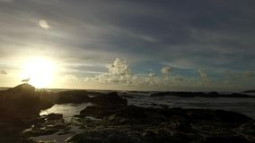 Slow pan of tide going out with gentle waves lapping on rocks and filling rockpools and a seagull watching the sun setting over th stock footage