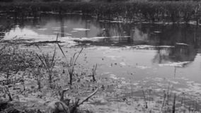 Slow panning of swamp stock video footage