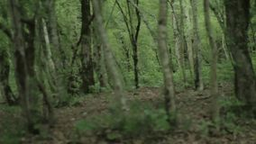Slow panorama of dark forest with trunks and roots. stock footage