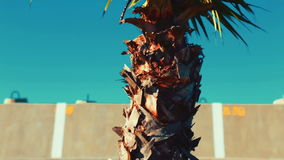 Slow panoramic view of a small palm tree on a sunny day, from the roots to the top. Video 1920x1080 - Slow panoramic view of a small palm tree on a sunny day stock footage