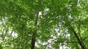 Slow POV walking through pathway along a green forest