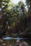 Slow River Flow Royalty Free Stock Photos