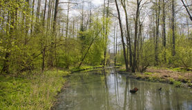 Slow river flowing across forest. River crossing natural forest in springtime Stock Photos